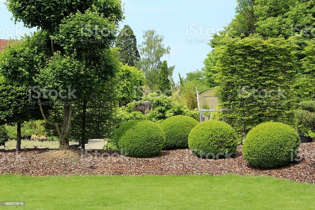 Gardendesign with buxus stock photo