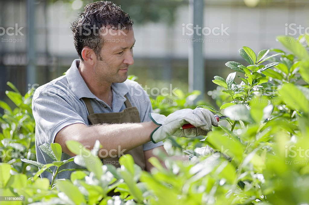 Gardener At Work royalty-free stock photo