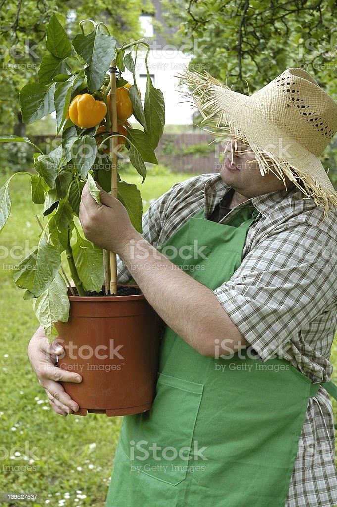 gardener: checking 3 royalty-free stock photo