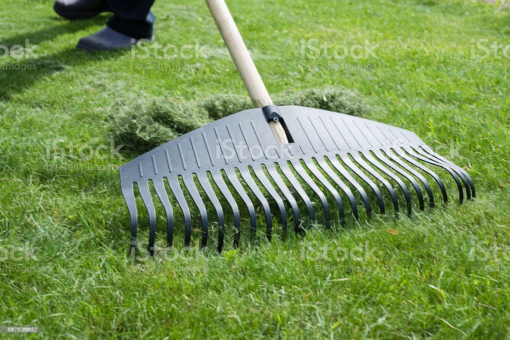 Gardener, collecting grass clippings with black plastic rake. stock photo