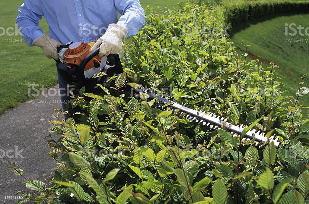 Gardener Cutting the hedges with electrical trimmer royalty-free stock photo