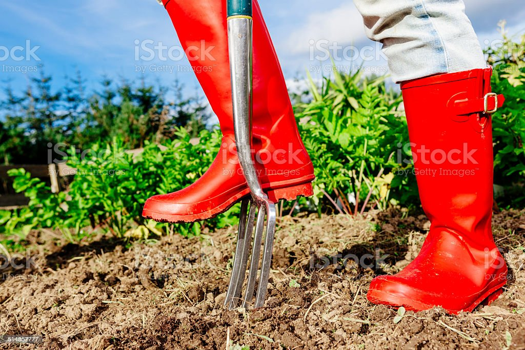 Gardener digging over vegetable garden stock photo