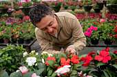 Gardener growing plants at a greenhouse