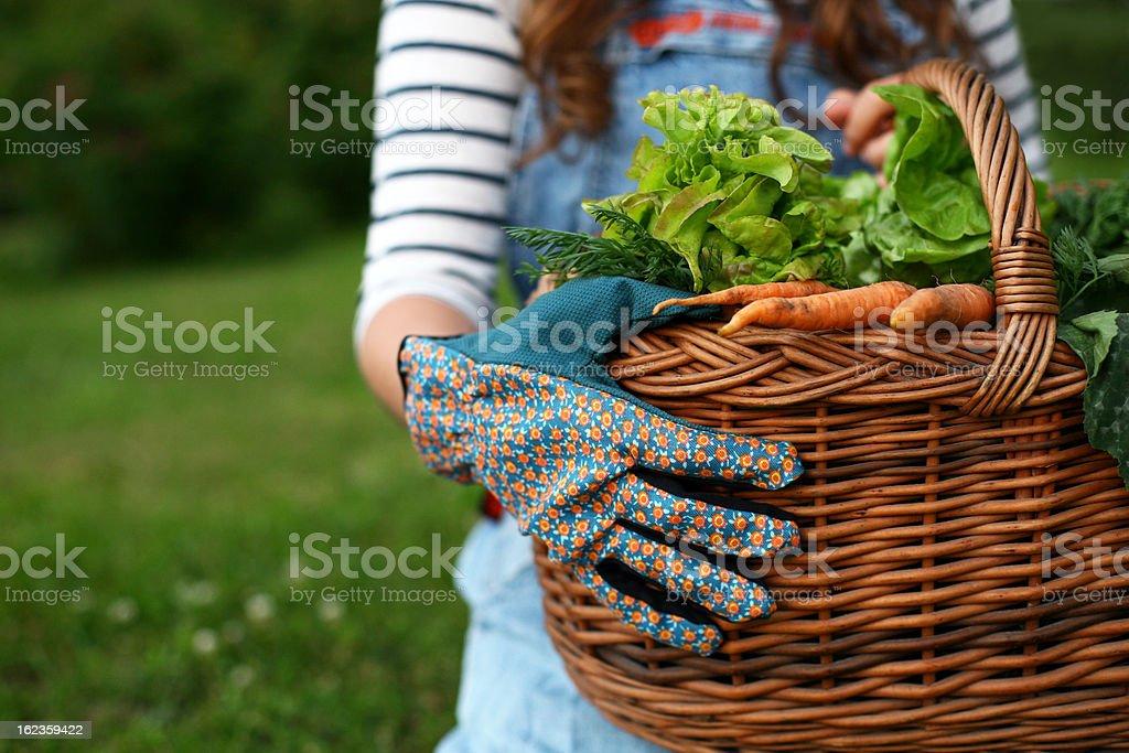Gardener holding a basket full of fresh vegetables stock photo