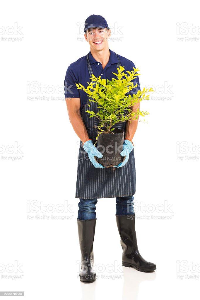 gardener holding a plant stock photo