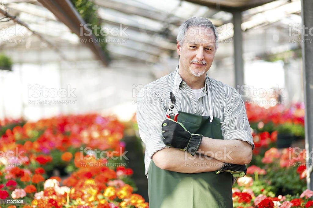 Gardener in a green house stock photo