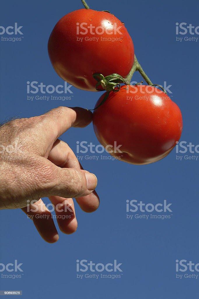 Gardener in Eden stock photo