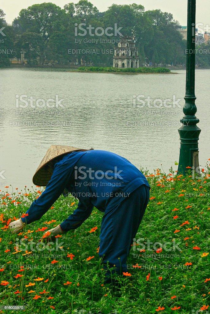 Gardener in Hanoi stock photo
