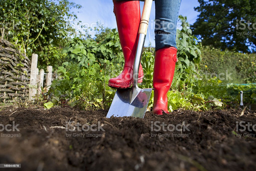 Gardener in red boots with spade in garden stock photo