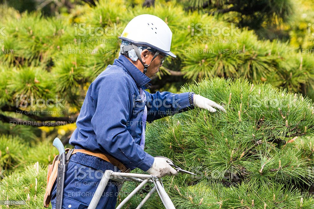 Gardener in Tokyo, Japan stock photo
