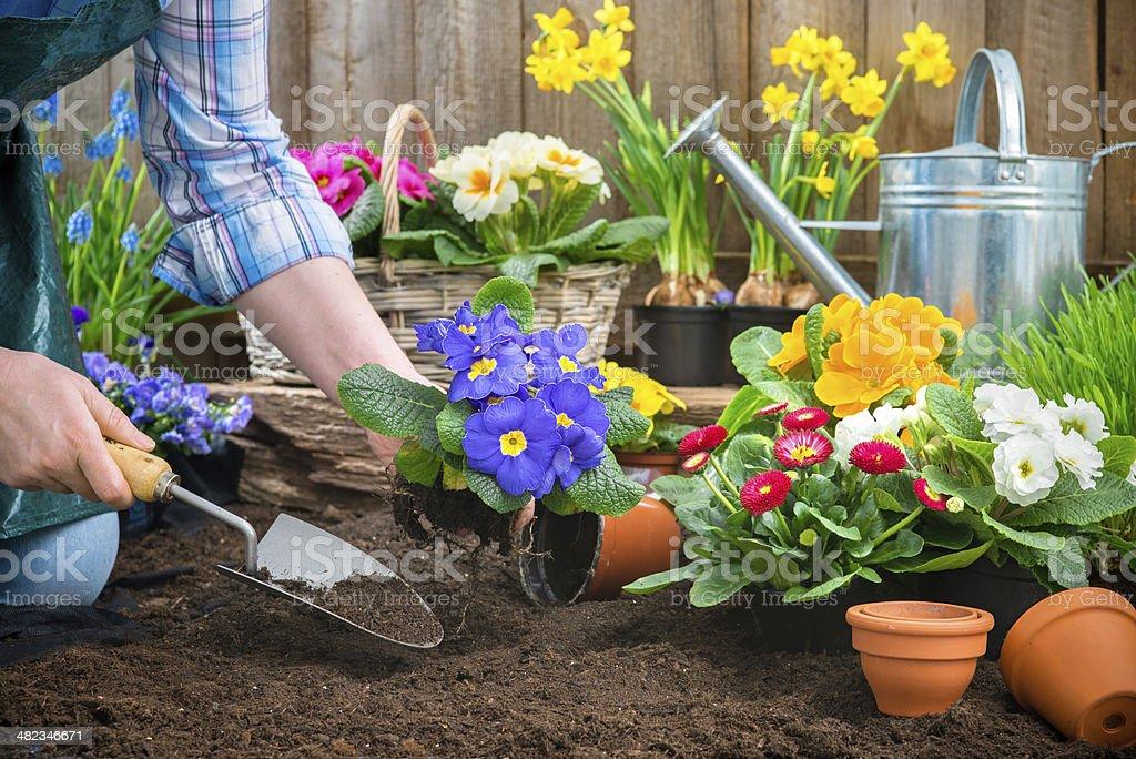 Как мы сажали цветы в городе 30