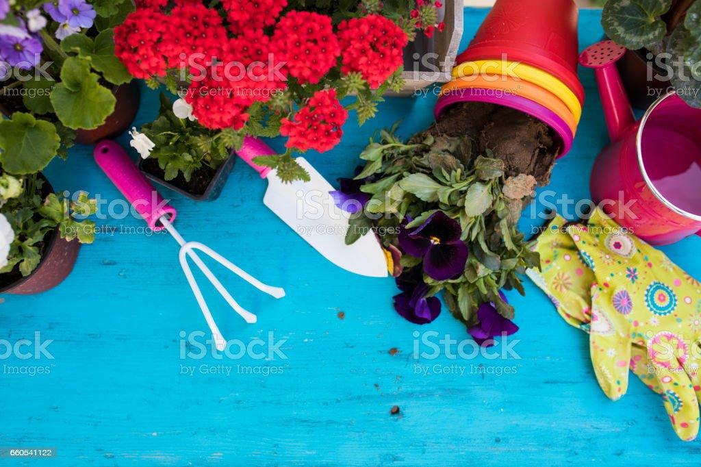 Gardener planting spring flower stock photo