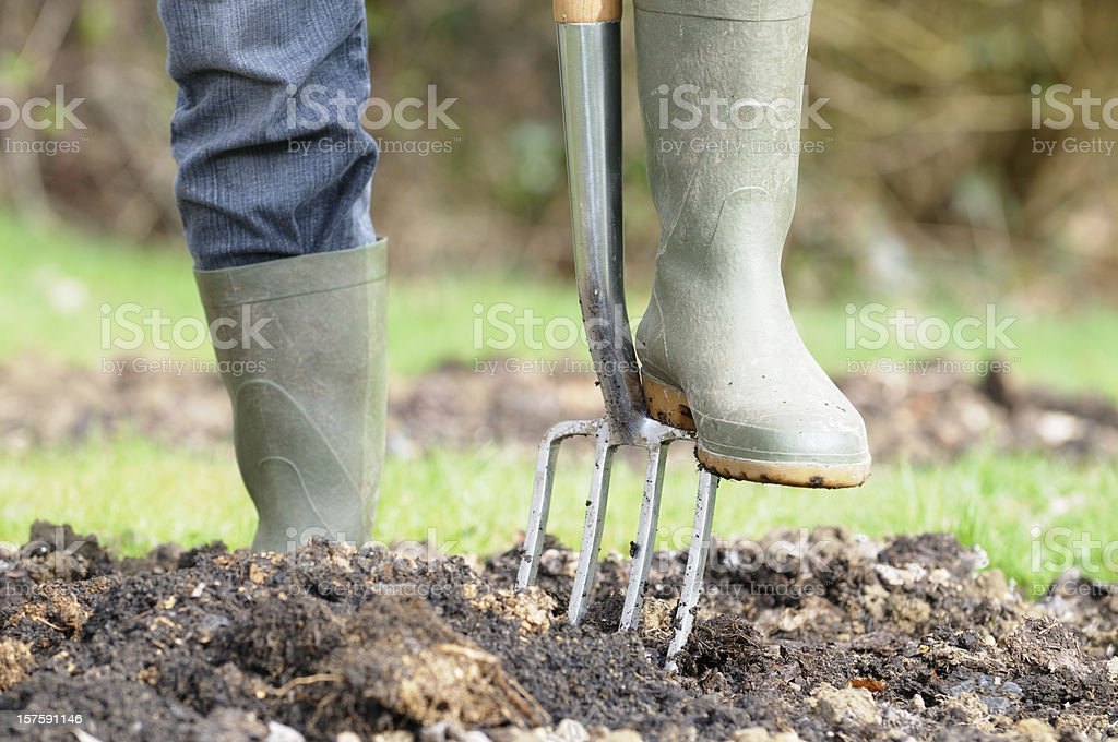 Gardener Preparing A Vegetable Patch stock photo