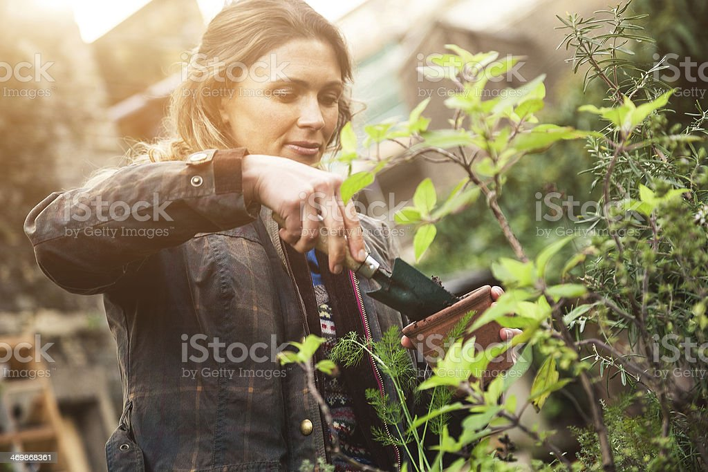 Gardener take care of the plants stock photo