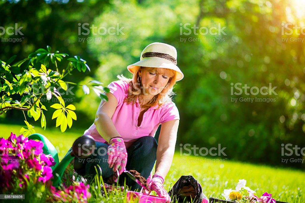 Gardener taking care of her plants in a garden stock photo