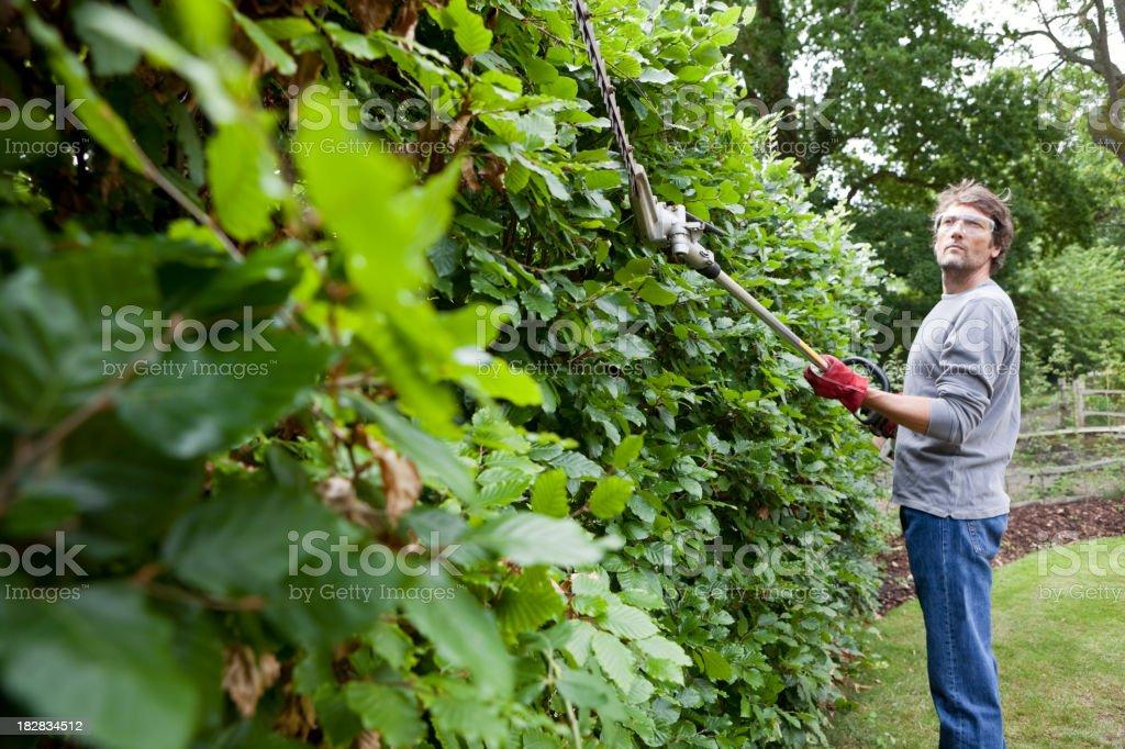 Gardener Trimming Beech Hedge stock photo