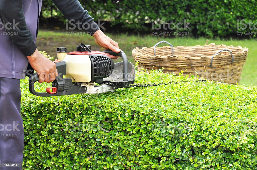 Gardener trimming green bush with trimmer machine stock photo