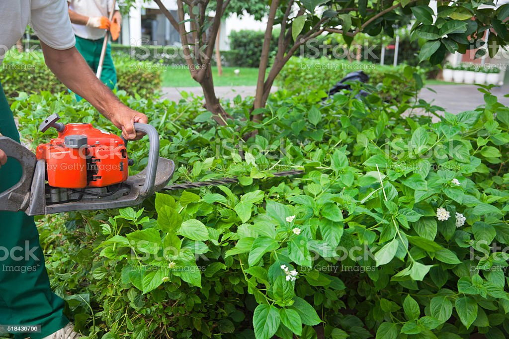 Gardener trimming hedgerow in a park outdoor stock photo