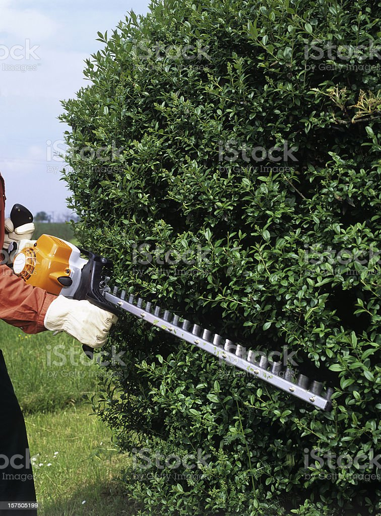Gardener trimming the hedges royalty-free stock photo
