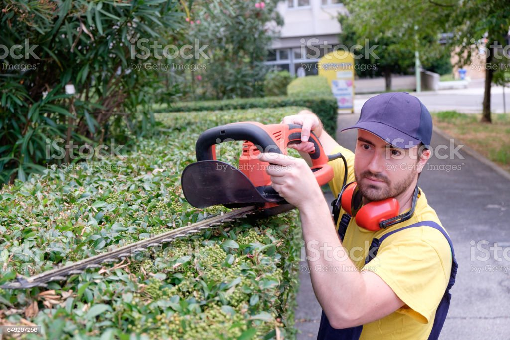 Gardener using an hedge clipper in the garden stock photo