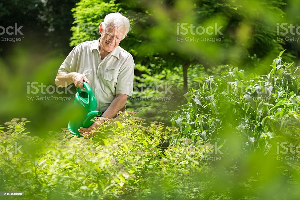 Gardener watering plants stock photo