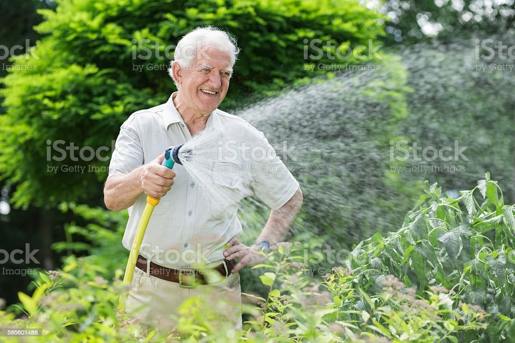 Gardener watering the plants stock photo