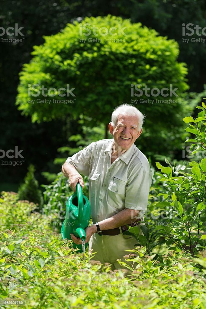 Gardener with a watering can stock photo