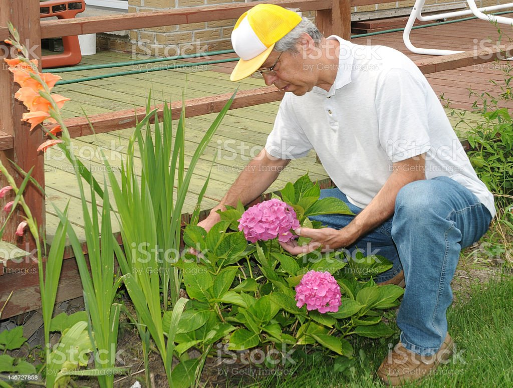 Gardener with flowers royalty-free stock photo