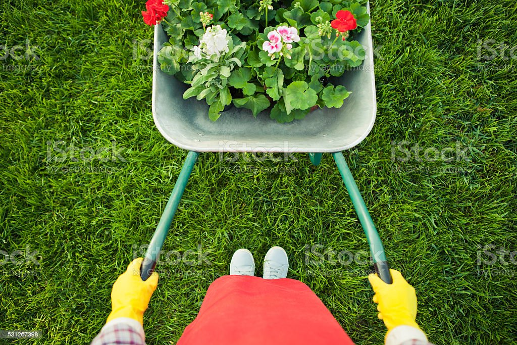 Gardener with  flowers stock photo