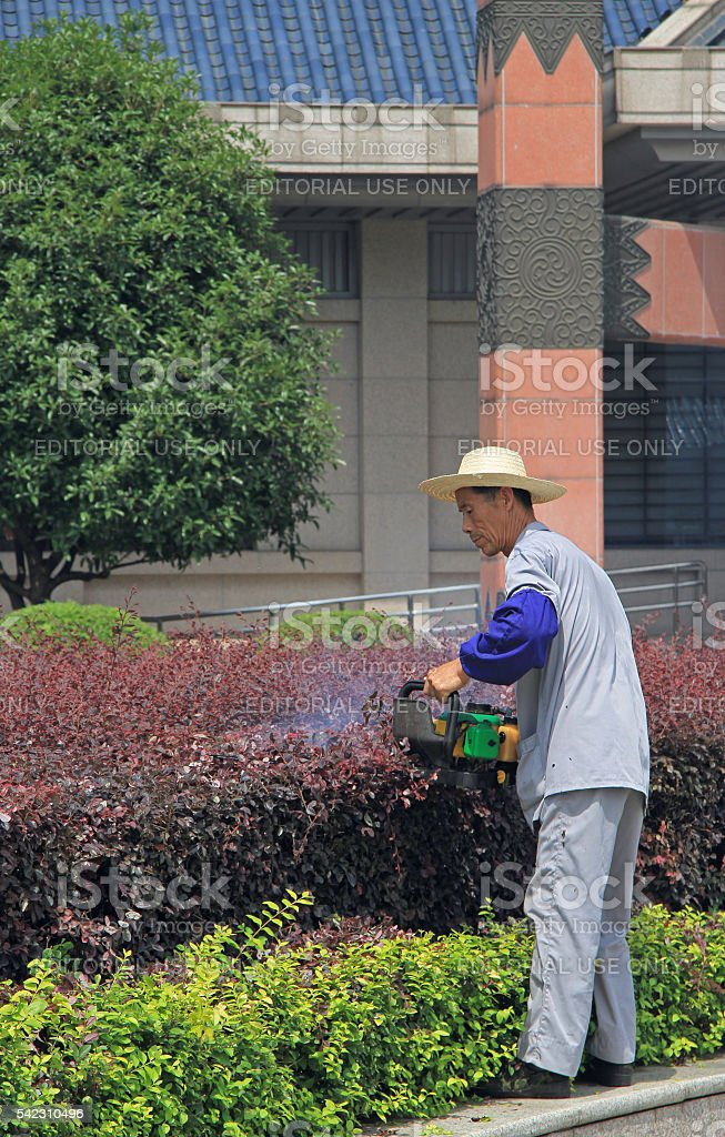 gardener with Gasoline Hedge Trimmer is doing his work stock photo