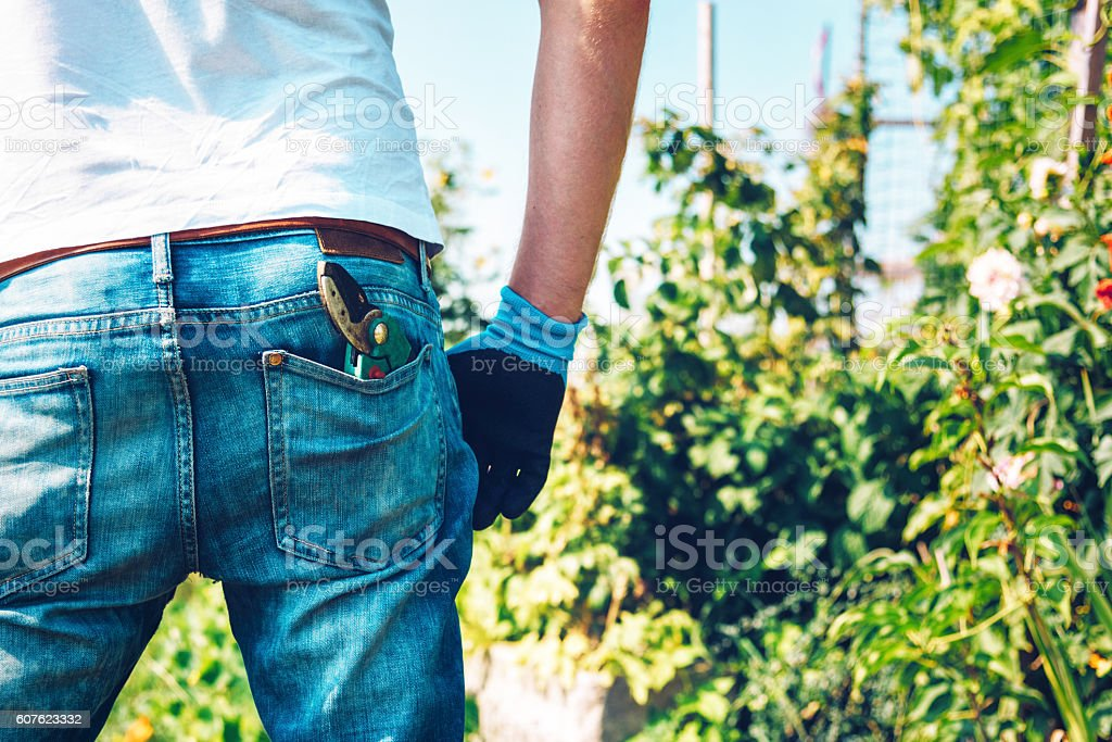 gardener  with hedge clippers in pocket of his jeans stock photo