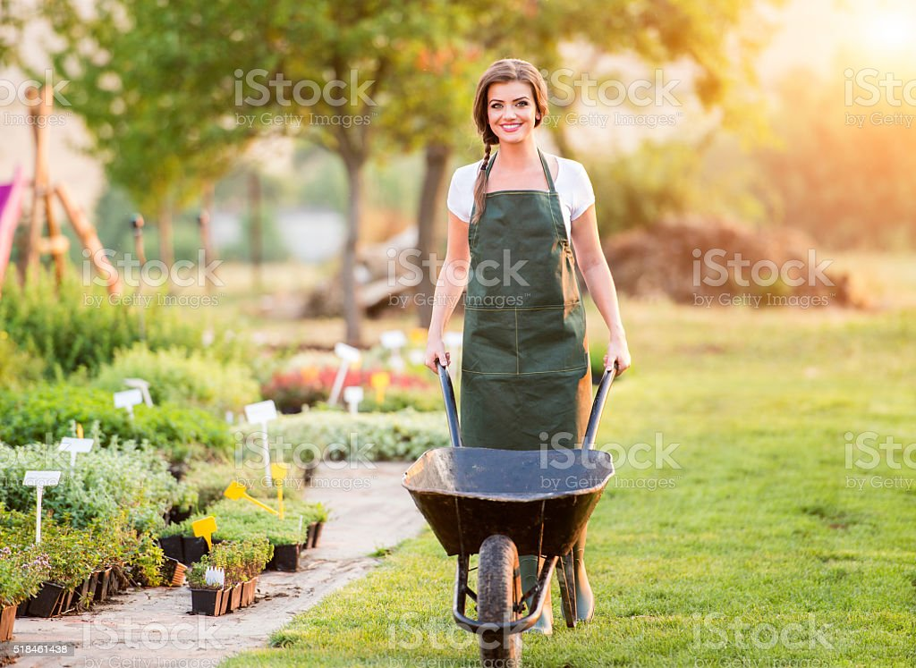 Gardener with wheelbarrow working in back yard, sunny nature stock photo