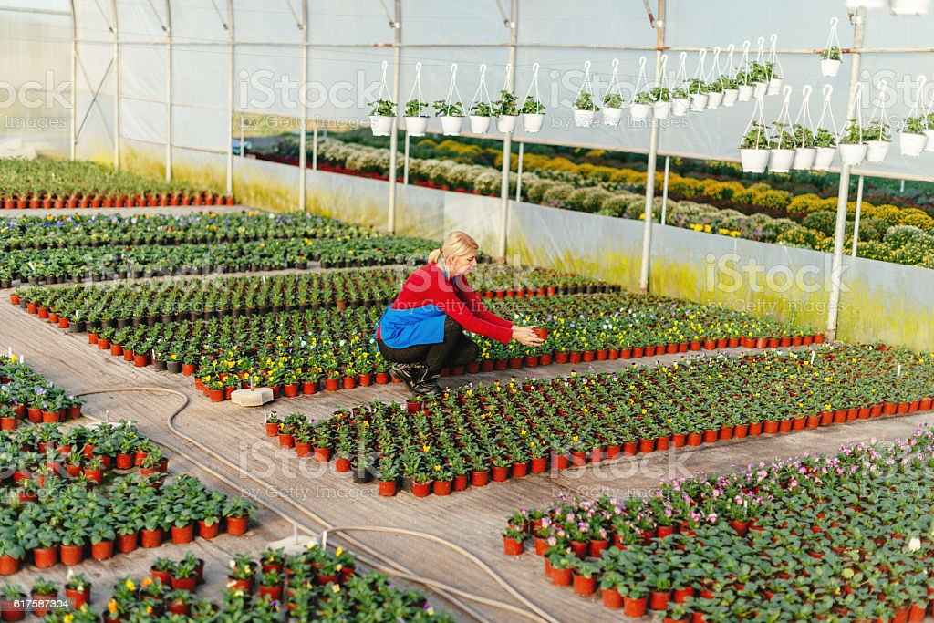 Gardener working with young plants in plant nursery stock photo