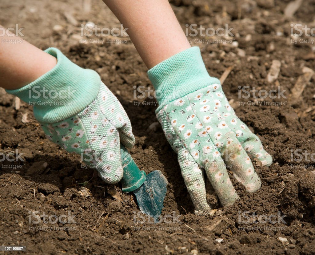 Gardener's Gloved Hands royalty-free stock photo