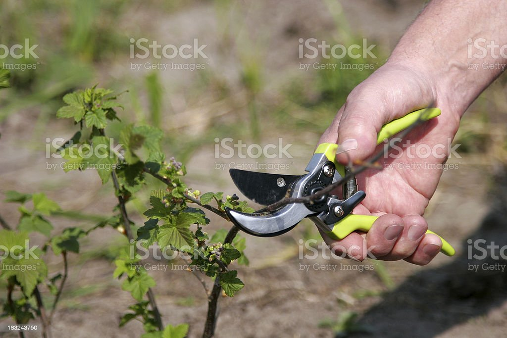 Gardener's Hand royalty-free stock photo