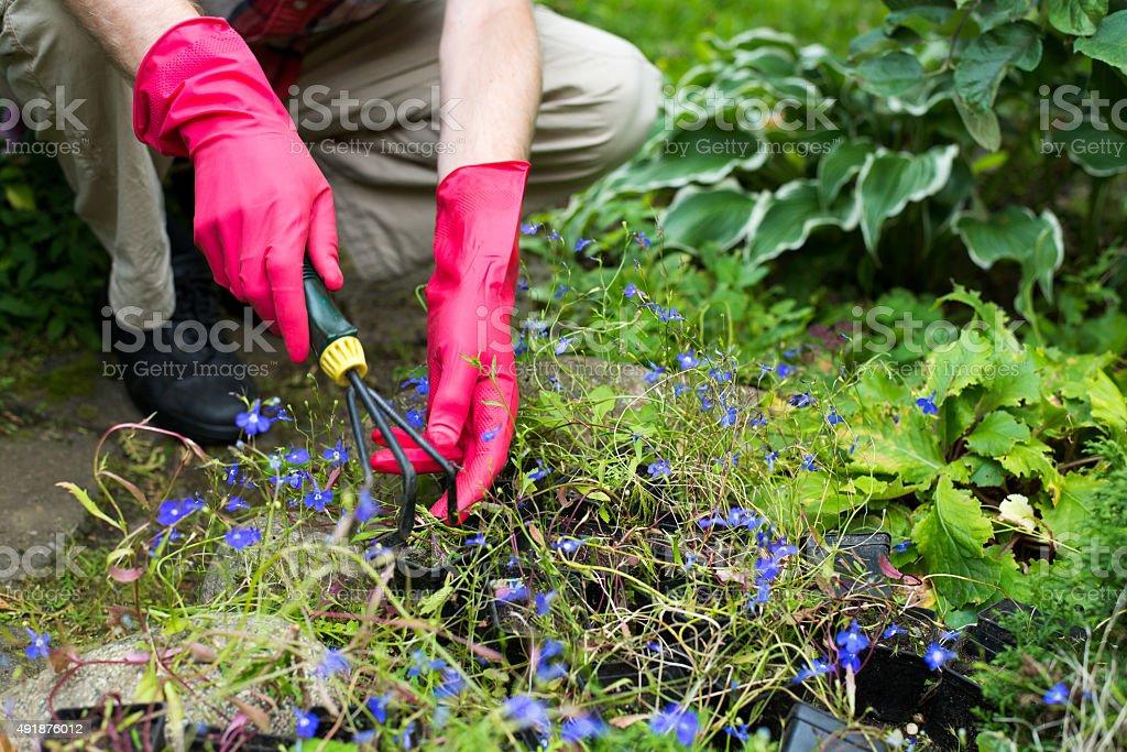 gardener's hands stock photo