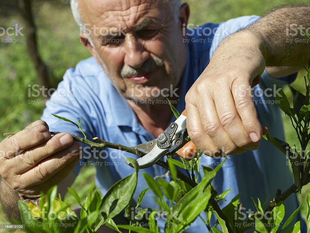 Gardeners stock photo