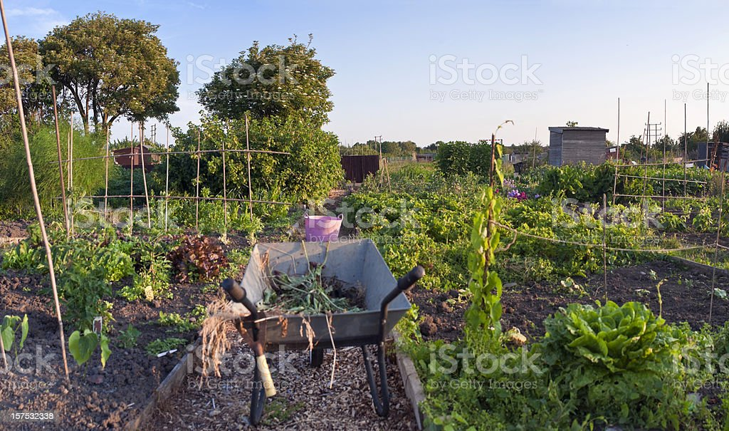 Gardeners time, allotment fruits and vegetables. stock photo