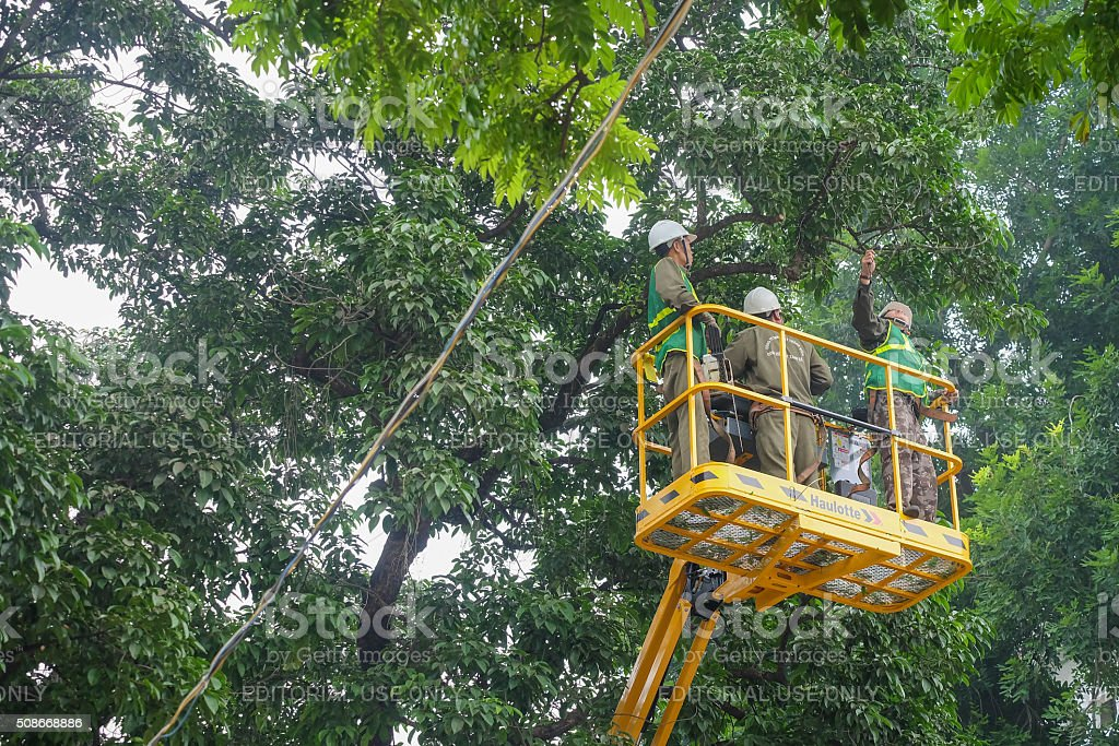 Hanoi, Vietnam - January 4, 2016: Gardeners trimming trees stock photo