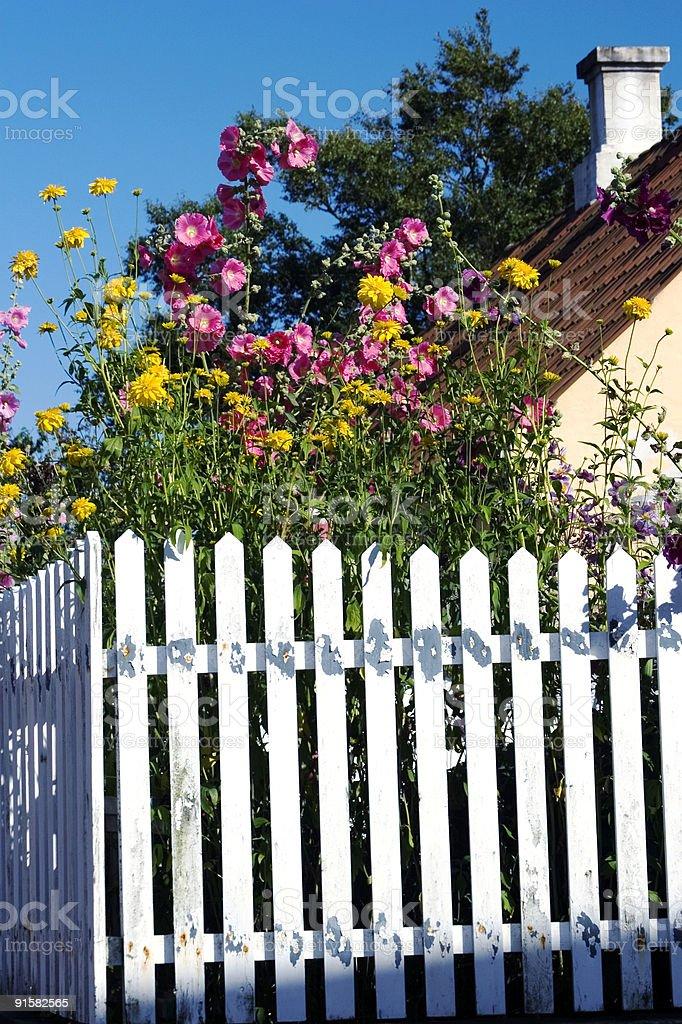 Gardenflowers stock photo