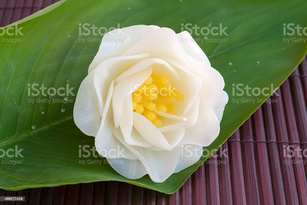 Gardenia candle flower royalty-free stock photo