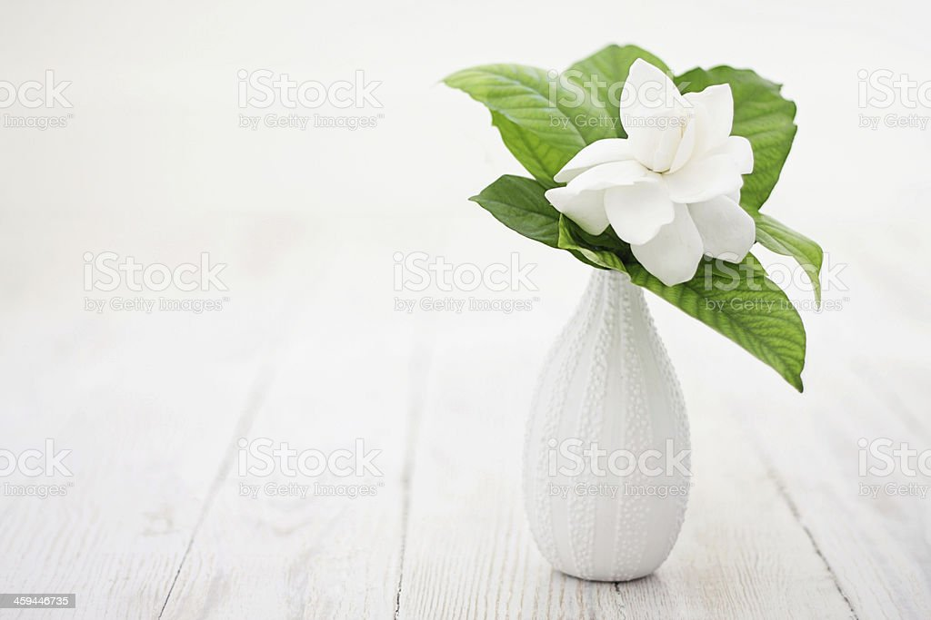 Gardenia flower with leaves in a vase on white wood stock photo