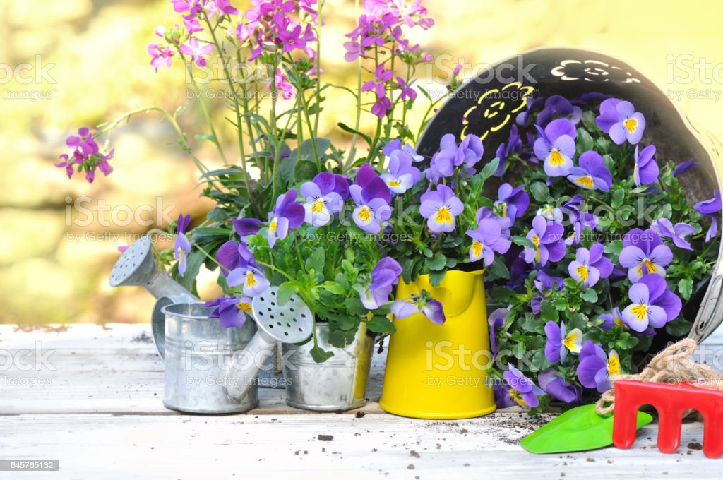 gardening and tools stock photo