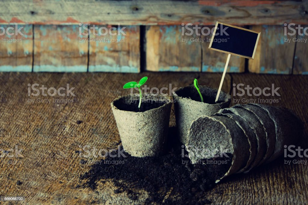 Gardening background.Young fresh seedling growing in pot. stock photo