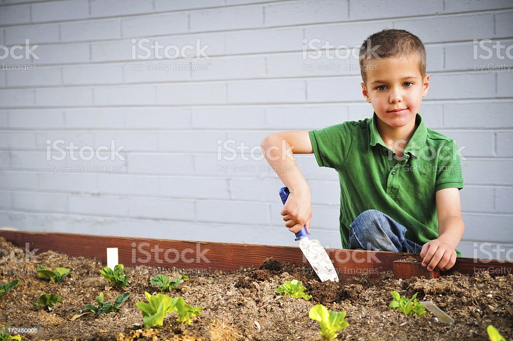 Gardening boy royalty-free stock photo
