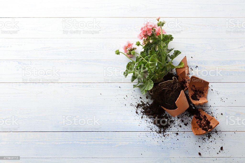 Gardening: Broken Plant Pot stock photo