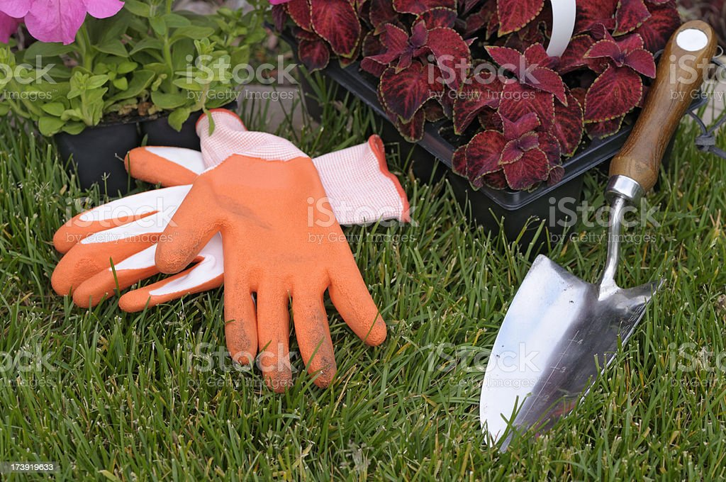 Gardening, cell packs with flower plants ready to be planted stock photo