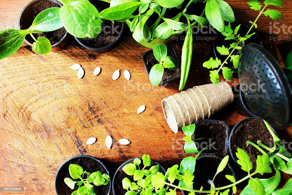 Gardening concept background with seedling, watering can and pots stock photo