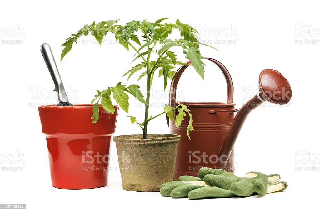 Gardening Equipment, Potted Plant, and Flower Pot, Isolated on White stock photo