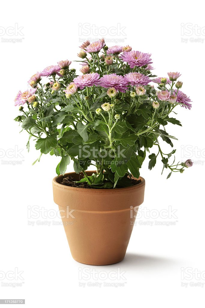 Gardening: Flowers stock photo